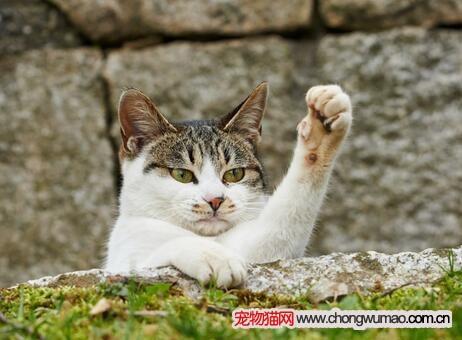猫咪脱臼能自己好吗图片