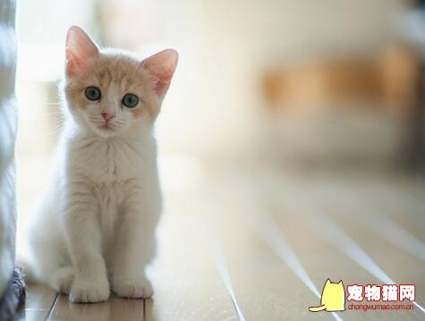 猫咪消炎药有哪些图片