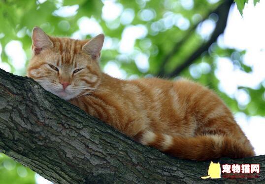 猫咪胸腔积液治疗费用图片