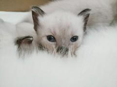 我家有猫初长成