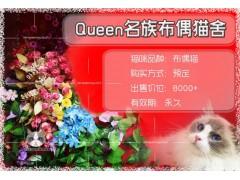 海外资深种猫来源,纯种布偶宝宝,长期有效哦!!