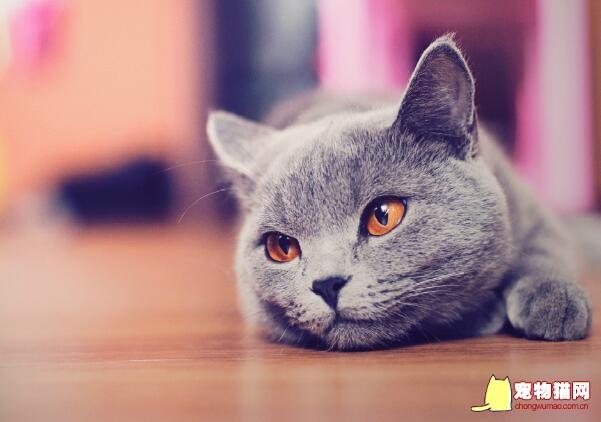 吸猫成瘾的心理本源与自我投射