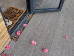 连续十几天给你家门口送小粉花?猫都比你会撩妹啊!