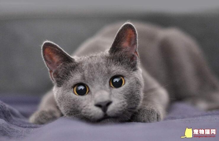 猫咪受伤怎么办