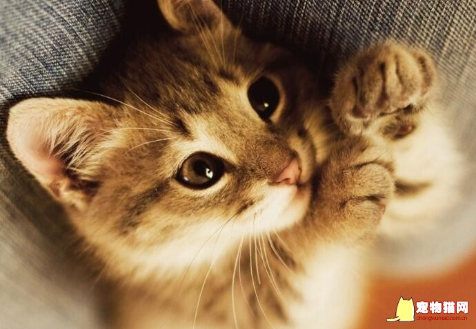 猫咪家庭急救小手册