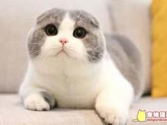如何帮猫咪洗耳朵的方法