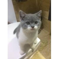 蓝白猫女生求包养
