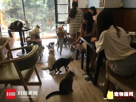 为自家猫咪专门开设咖啡馆