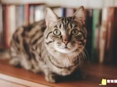 猫流量时代已经到来:老板,快养只猫吧,我主动申请996