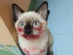 """女主人下班回家看到猫咪""""满脸是血"""""""