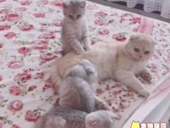 孝顺猫咪给猫妈按摩,另两只则整天只会卖萌