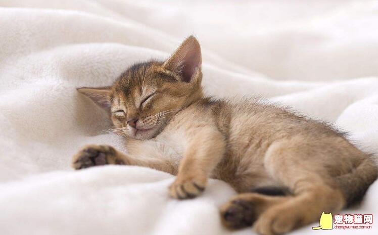 猫咪钻被窝会不会闷死图片