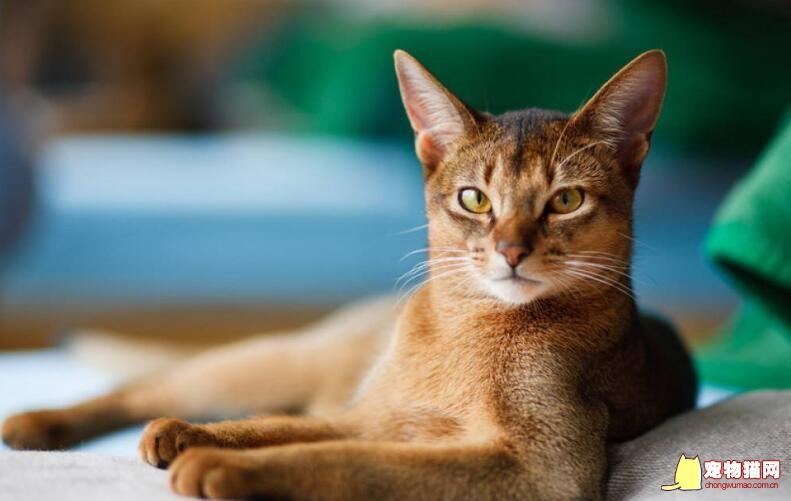 宠物猫的名字