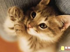 你家的上榜了吗?趣味猫咪颜值排行榜TOP10