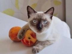 养猫指南:饲养猫咪的25个小知识
