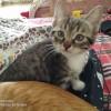 欢迎哈尔滨市区的猫咪喜爱者
