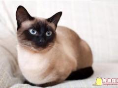 好养的小型宠物猫TOP5排名