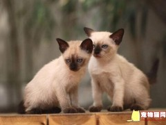 宠物猫走丢了会自己回家吗?