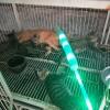 大量出售狸花猫正规土猫养殖场家