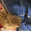 橘猫公的,猫咪很可爱,健康