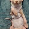陕西西安,自己繁殖无毛猫,白皮,精灵耳,3个月妹妹