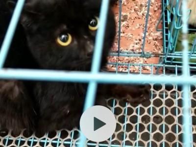 一只黑猫,大孟买。