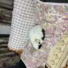 猫咪非常聪明可爱,坐标四川绵阳