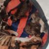 自家猫生了几只,坐标河南许昌