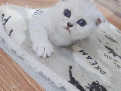 自家猫生的第一胎 小猫都非常活泼可爱