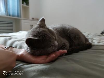 自家养的蓝猫, 想给他找一个好主人