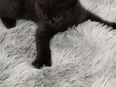小黑猫找新家