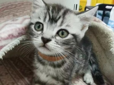 猫咪崽喜欢的拿走,坐标吉林长春