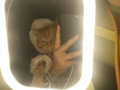 自己家养的猫,有意QQ或者微信(猫条,猫粮,猫笼子都有)