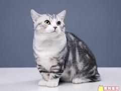 中国销量前10名宠物猫价格排行榜!