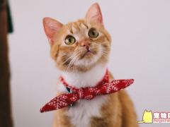 猫疫苗怎么看保质期