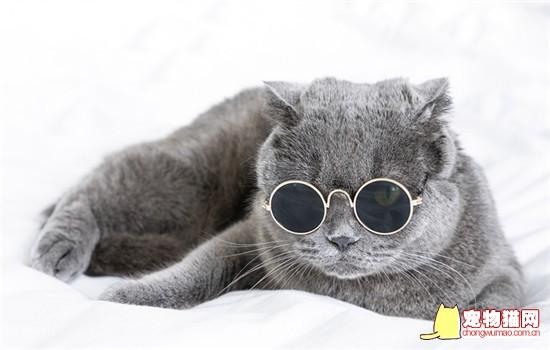 英短和蓝猫是一个品种吗 英短和蓝猫不是一个品种