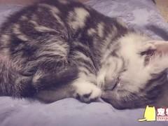 怎么判断小猫是否健康 猫咪健康初步判断方法