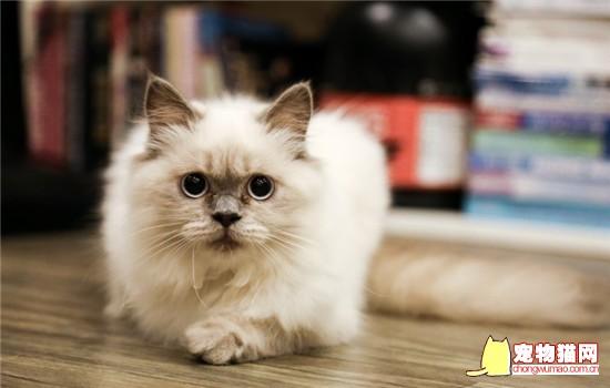 最受欢迎的猫有哪些 你家的猫主子上榜了没有插图