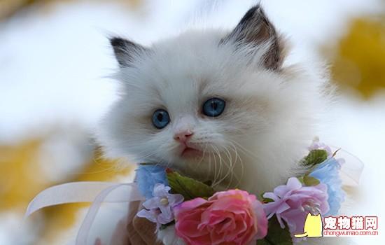 小奶猫是什么意思 是指多大年龄的猫插图