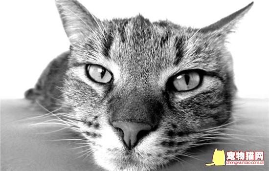 猫咪带铃铛会影响听力吗 什么样的猫需要带铃铛插图