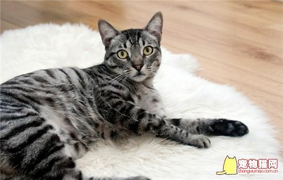 猫咪带铃铛会影响听力吗 什么样的猫需要带铃铛插图(1)