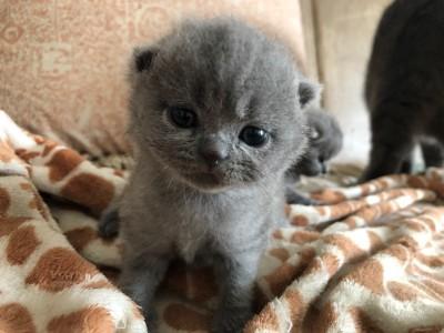 自家猫咪繁殖生育活泼健康