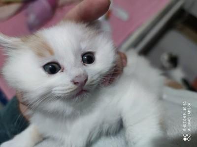 所在地北京昌平。三小只,5周大,给猫咪找家