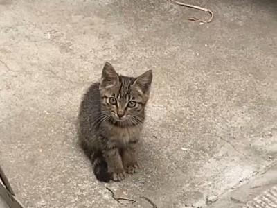 衡阳市内支持自提狸猫