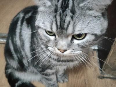 虎斑猫,公猫一岁三个月,因外地工作不能养了。有意者私聊