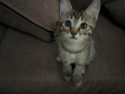 自家的小奶猫