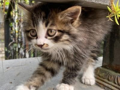 可讲价面议 可发顺丰包邮 四川省成都市金牛区 活泼小猫