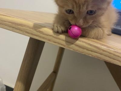 三个月橘猫