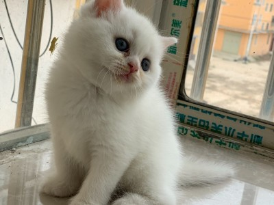 两个月猫咪找新家