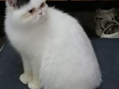 三个月大加菲猫 荆州沙市周边 价格好说
